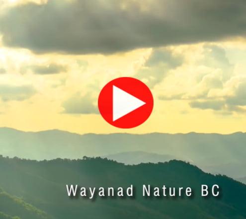 Wayanad Nature BC